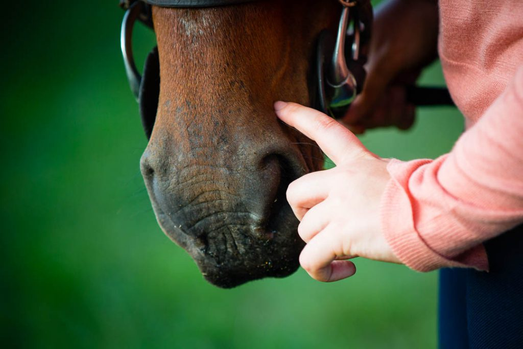 hand scratching horse's nose