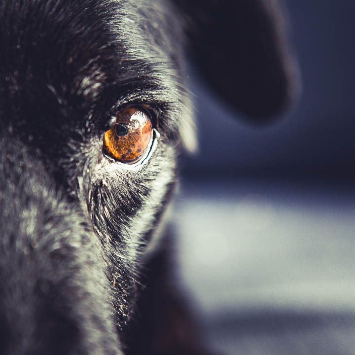 dog photography closeup of eye