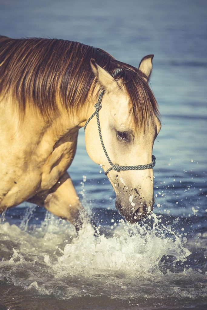 Horse splashing at the beach