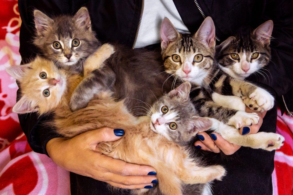 Kittens_Gretchen-201