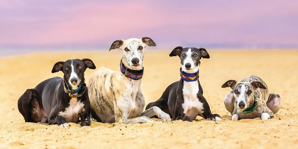 4-Whippets-Retouched 1200px